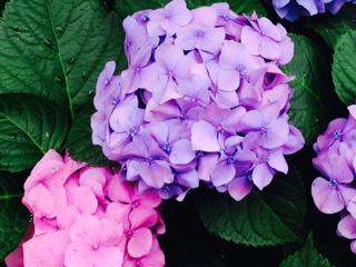 image/2014-06-17T12:42:51-1.JPG