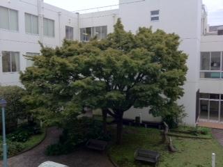 image/2011-10-20T10:22:43-1.JPG