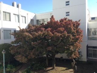 image/2014-11-20T00:10:34-1.JPG