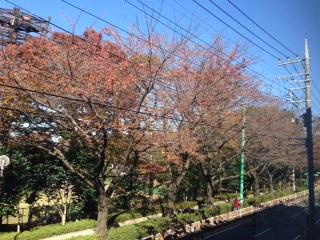 image/2014-11-20T00:11:19-1.JPG