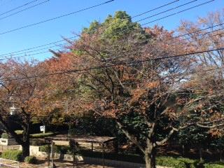 image/2014-11-20T00:11:36-1.JPG