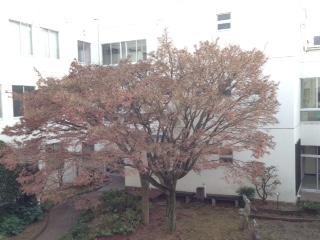 image/2014-12-10T12:18:20-1.JPG