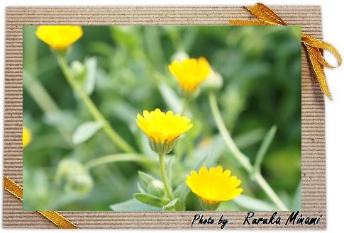 黄色い花.png